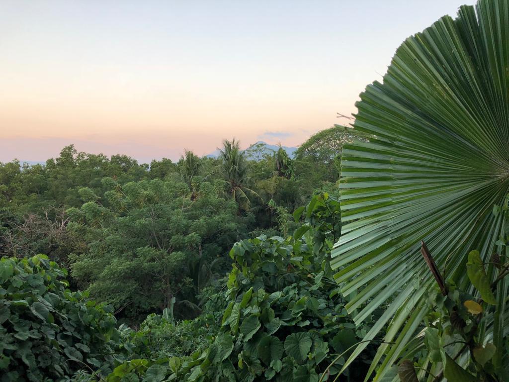 Sulawes_tropische_Hitze_und_bunte_Korallenriffe_12