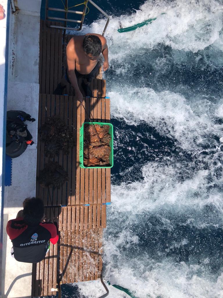 Sulawes_tropische_Hitze_und_bunte_Korallenriffe_13