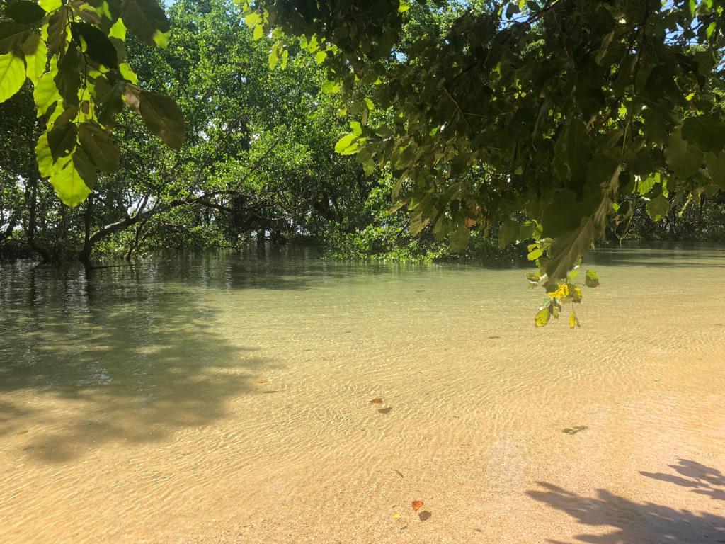 Sulawes_tropische_Hitze_und_bunte_Korallenriffe_14